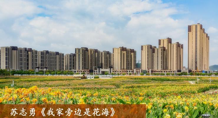 苏志勇《我家旁边是花海》