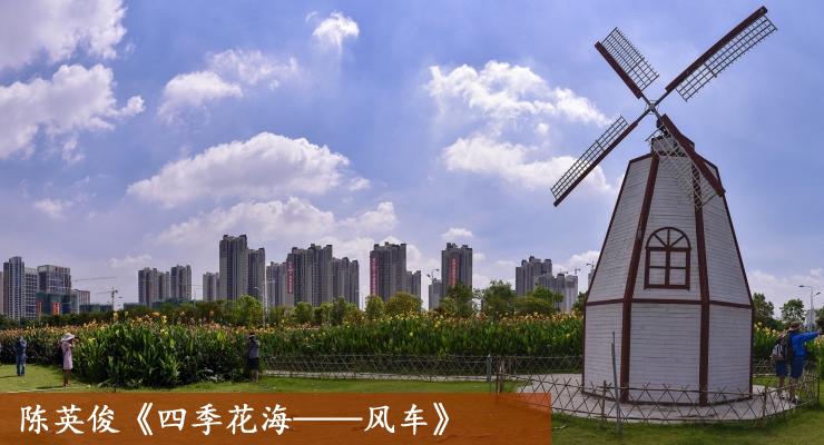 陈英俊《四季花海——风车》